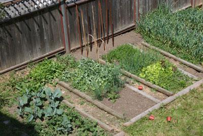 Garden-early-June