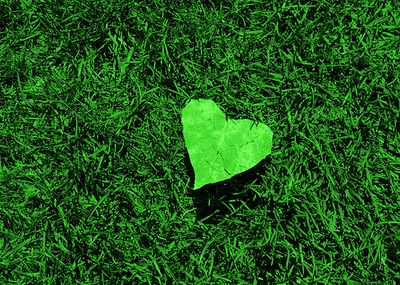Green grass with heart
